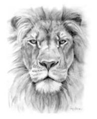 CTR Lion.jpg