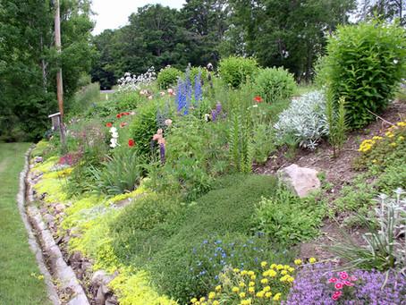 Adventures in Gardening: My Roadside Flowerbed