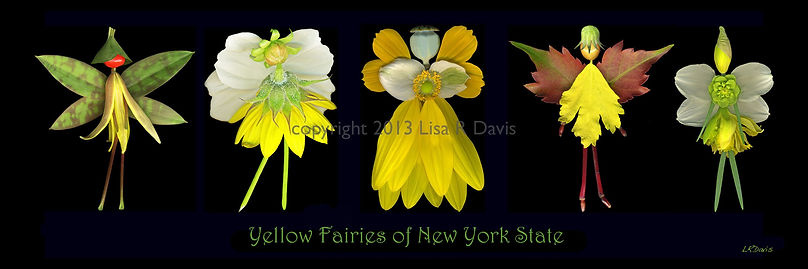 Yellow Flower Fairies, nature fairies, NYS fairies, Lisa R Davis