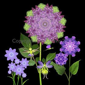 flower fairy realm, flower fairy, nature fairies, where fairies dwell