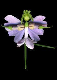 Lilac Fairy, flower fairy, spring fairy