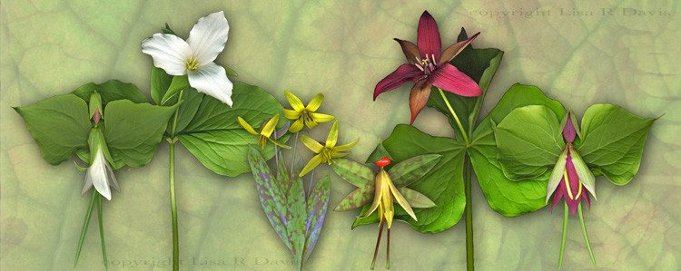 Leah Trillium, Addie Trout Lily, and Robin Trillium with the flowers they wear.
