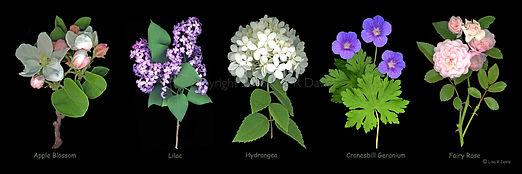 Apple Blossom, Lilac, Hydrangea, Cranesbill Geranium, Fairy Rose