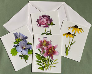 Floral Notecards: Rose-of-Sharon, Peony, Black-Eyed-Susan, Stargazer Lily