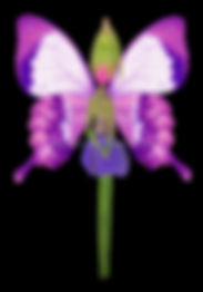 a primrose fairy with butterfly wings, flower fairy, butterfly fairy