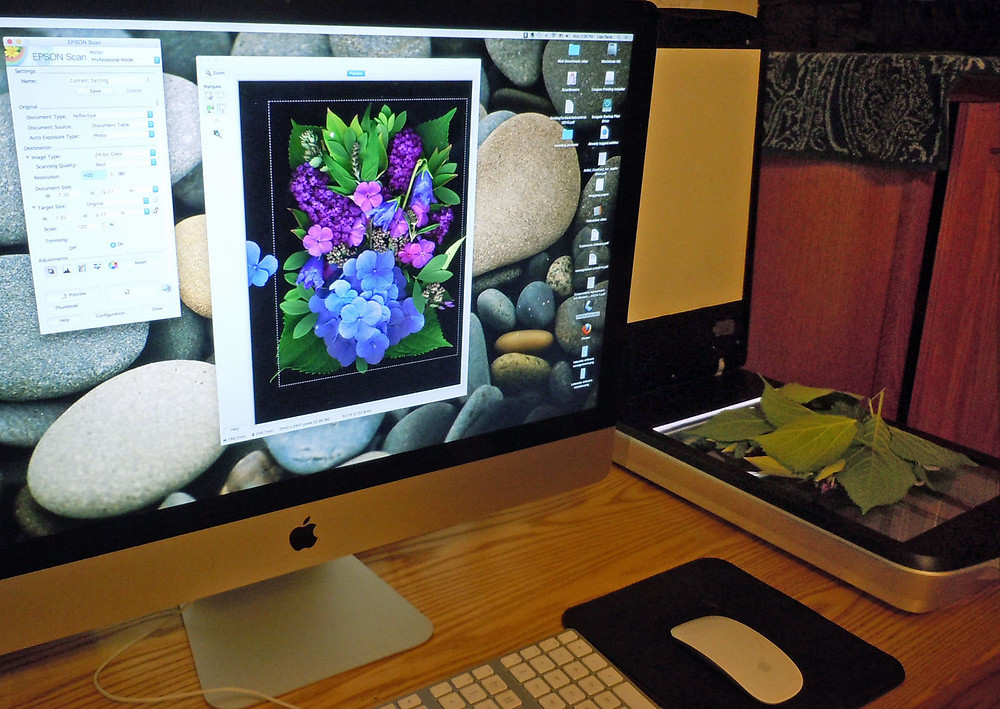 Flowers and plant parts are layered face-down on the flatbed scanner