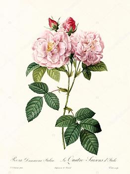 Herbal Medicine & Aromatherapy_edited_ed