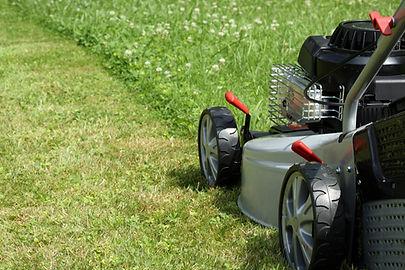 tonte-pelouse-2646068.jpg