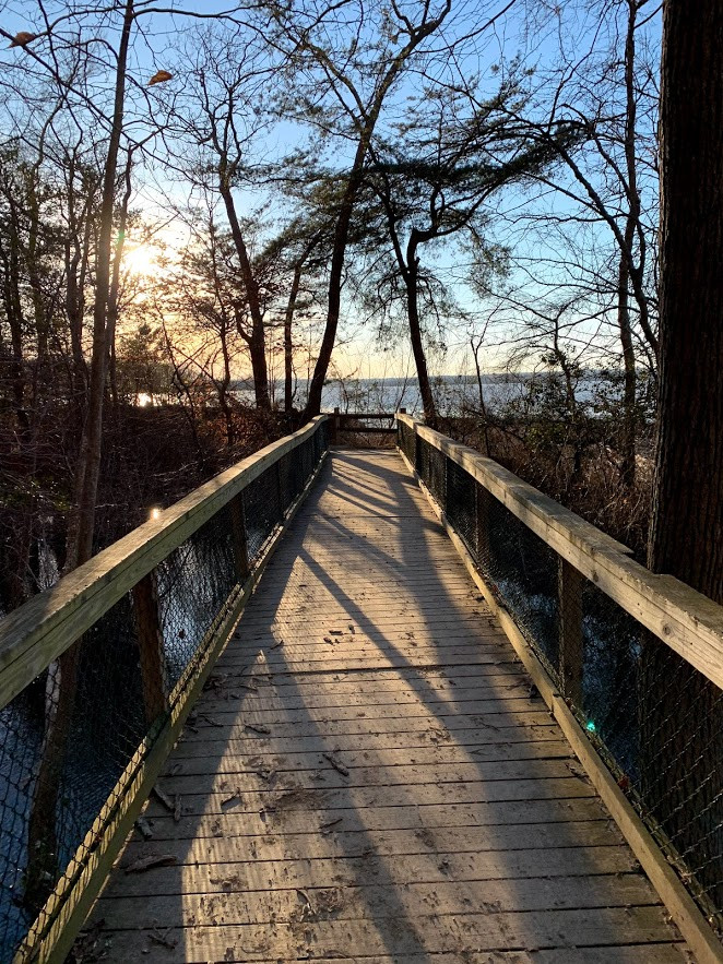 Boardwalk in Mason Neck State Park
