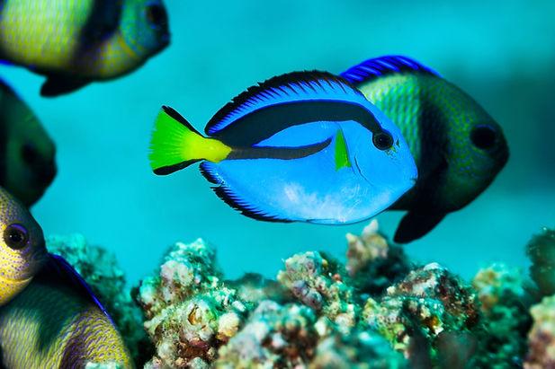 blue-fish.jpg