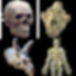 Skulls and Skeletons 3D.png