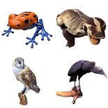 Animals 3D.png