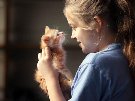 Penny, The Kitten