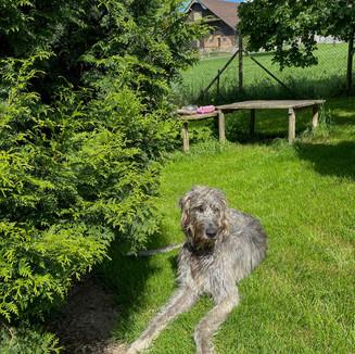 Hundegehege mit Innen-und Aussenbereich