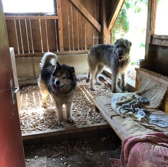 Hundegehege mit Innen - und Aussenbereich