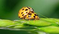 ladybug%202_edited.jpg