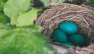 nest-843231_1280_edited.jpg