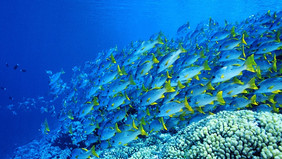 Top of the subaquatic bucket list