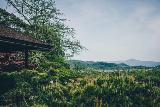Japan - Japansk trädgård