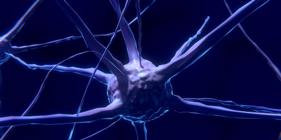 Workshop de Neurofitness - Ginástica Mental