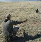 Dog training Tucson, Gun dog training Tucson