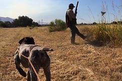 Gun dog trainer