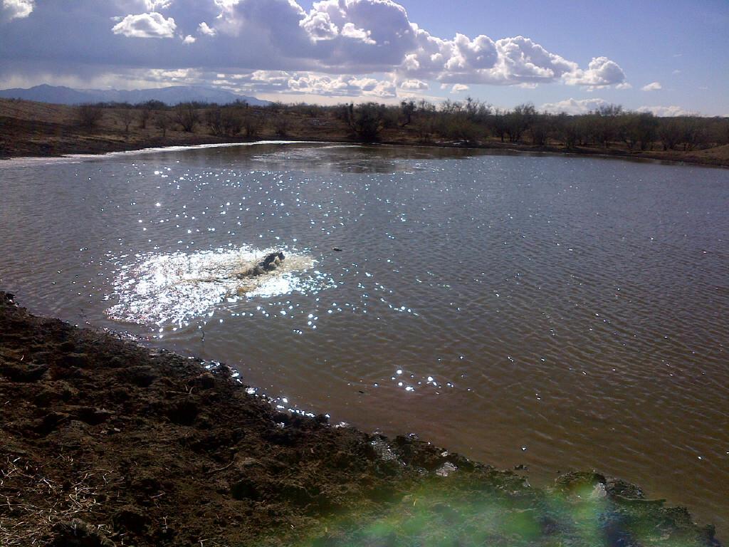 Pond hopping ducks.jpg