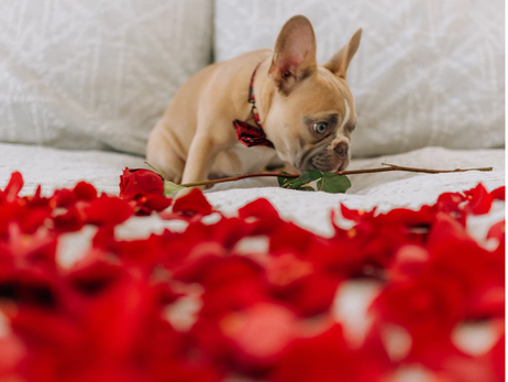 10 Best Things to Do Valentine's Day 2021