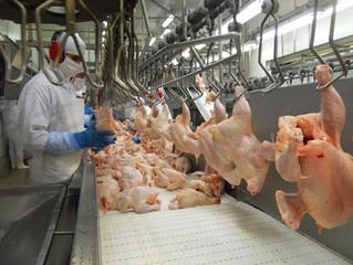 Exportações de frango devem aumentar para o ano que vem