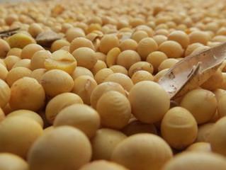 SOJA/CEPEA: EUA intensificam colheita; Brasil e Argentina avançam semeio