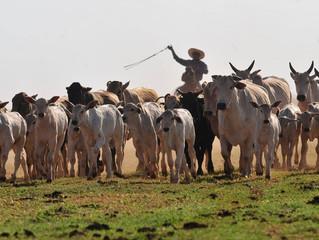 Rebanho bovino brasileiro ficou 1,5% menor em 2017