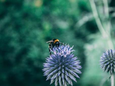 The Magic of Bees