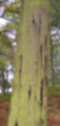 AOD_tree.png