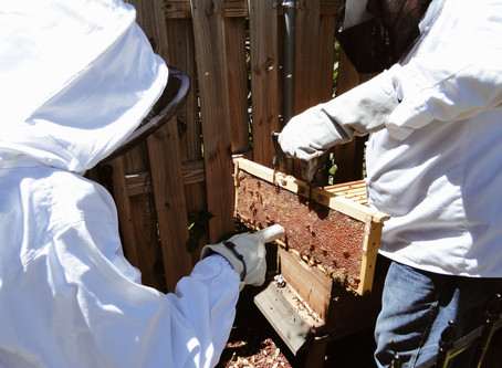 Honeybees are much more important than they seem