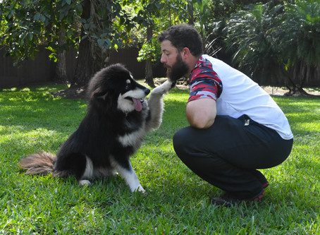 Local husky rescue saves dogs from death row