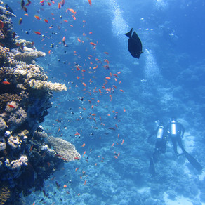 From red to white: Florida's sun-loving coral reefs losing color
