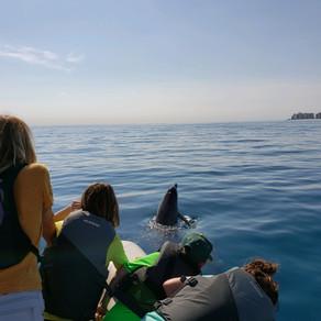 Dolphin tours fund Florida coastal conservation