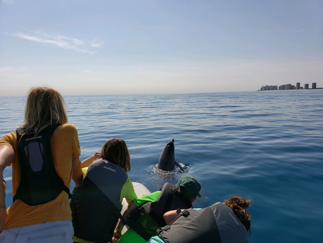 Dolphin tours fund Florida coastal conservation