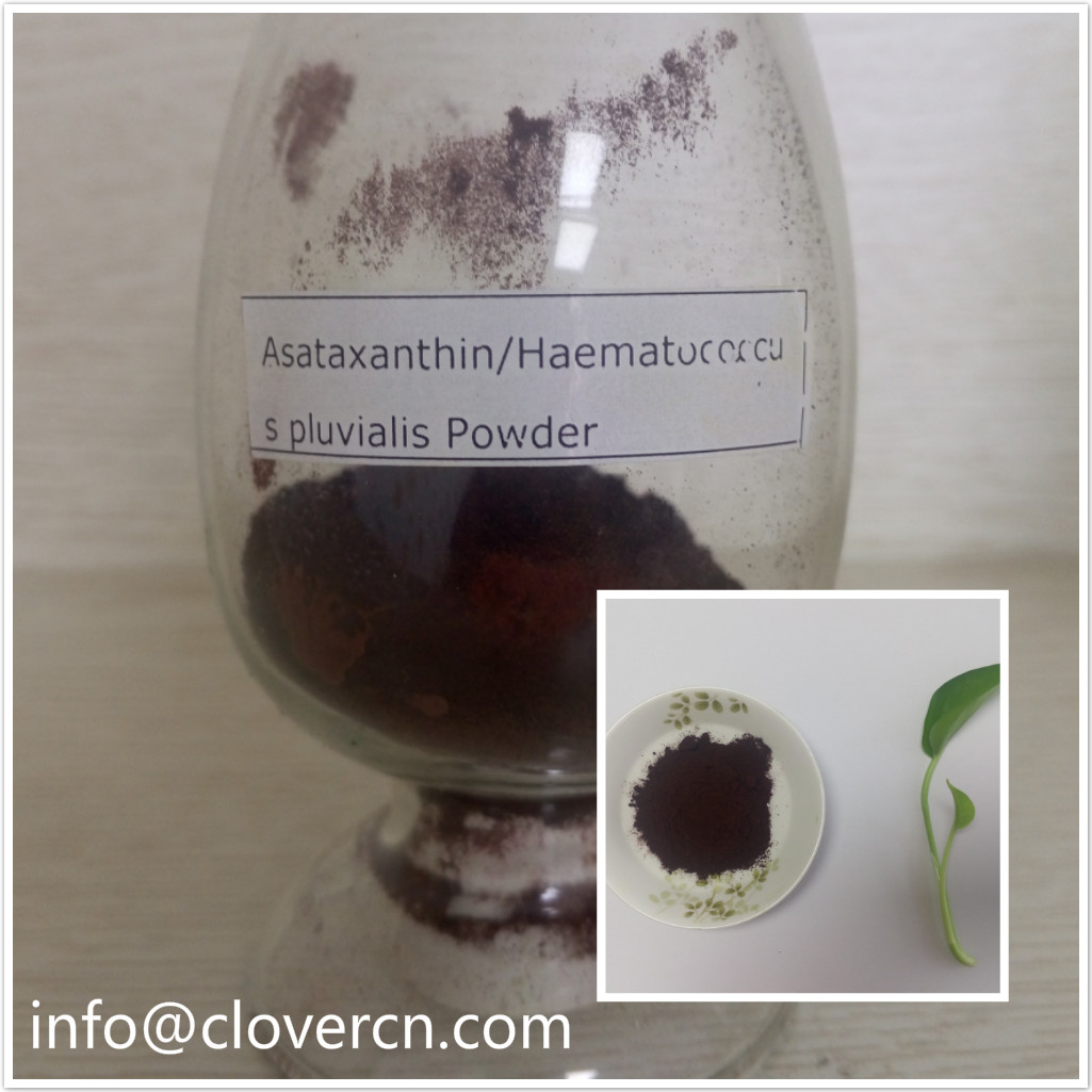 Asataxanthin Haematococcus pluvialis Powder.jpg