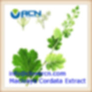 Macleaya Cordata extract info_clovercn.c