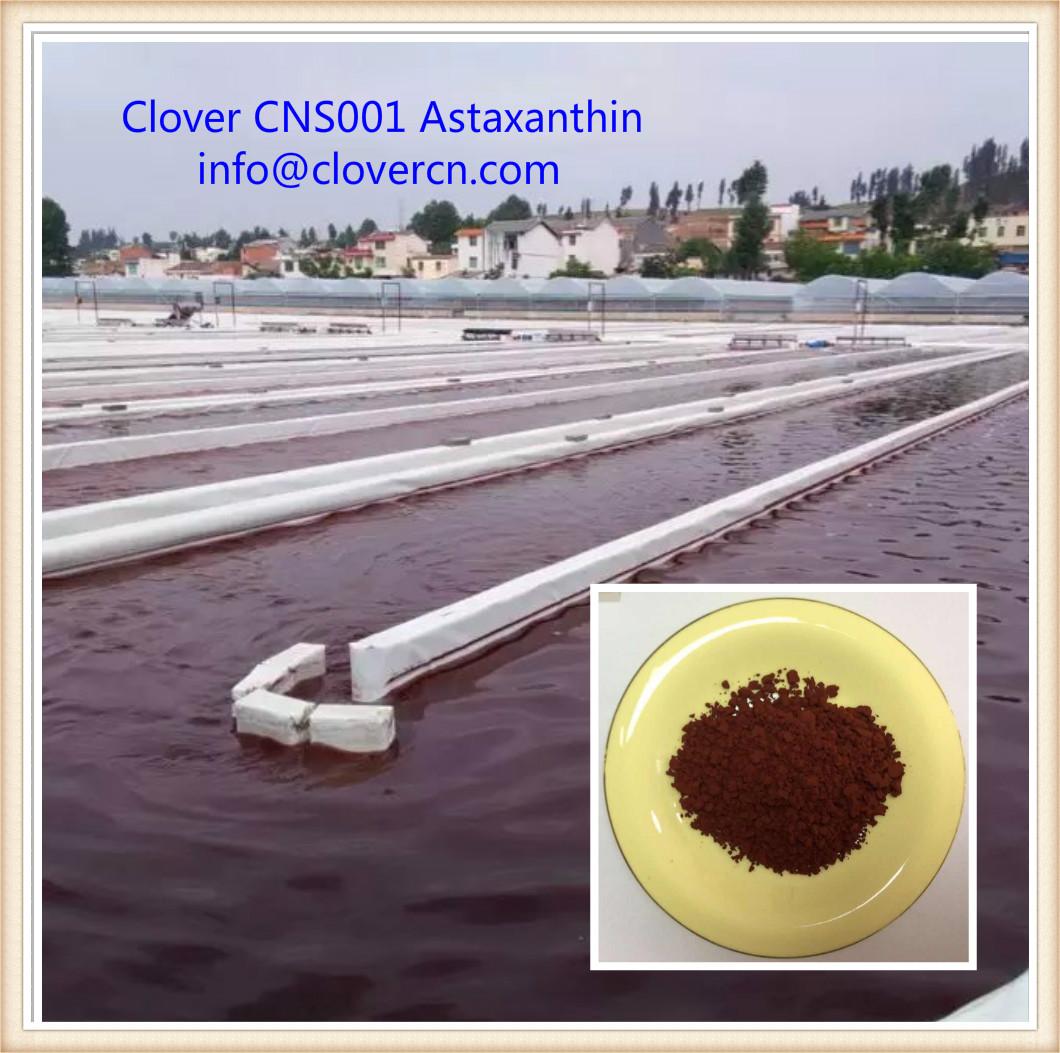 Buy Astaxanthin Astaxanthin info_clovercn.com