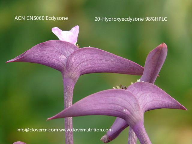 CNS060 CNS060 20-Hydroxyecdysone 98%HPLC