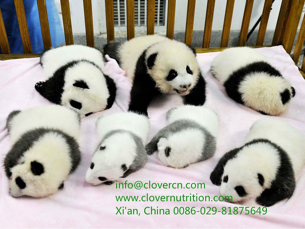 A Clover Nutrition Inc Panda Baby