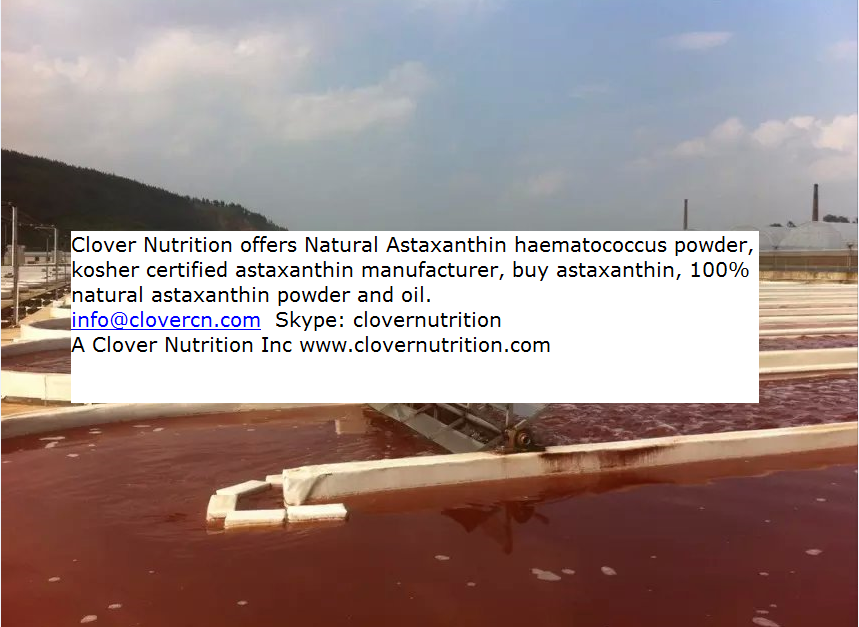 Buy Astaxanthin Natural Astaxanthin Powder