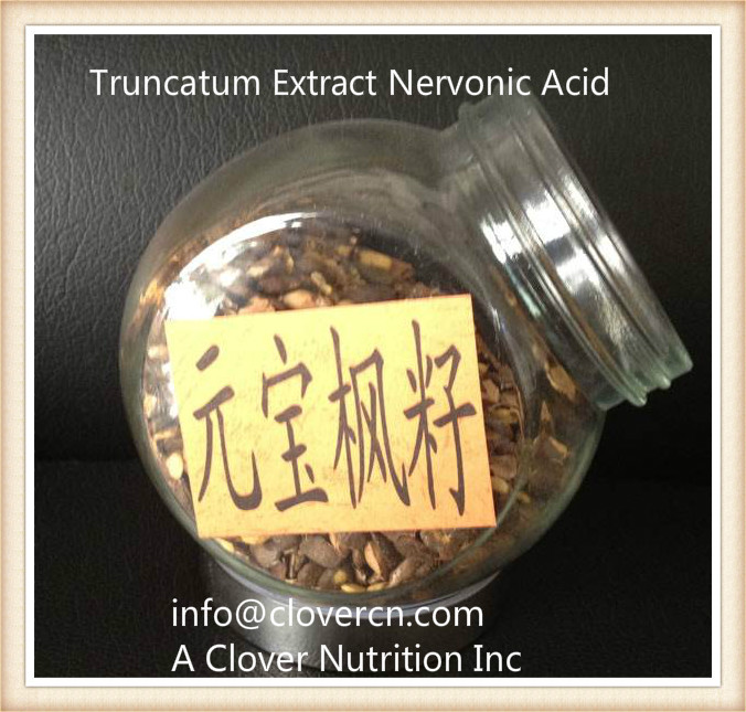 Acer truncatum Extract Nervonic Acid food sources