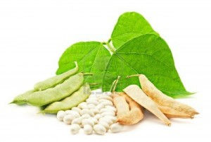 where to buy White kidney bean extract
