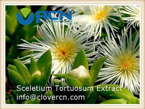 Natural Kanna Sceletium Tortuosum Extract