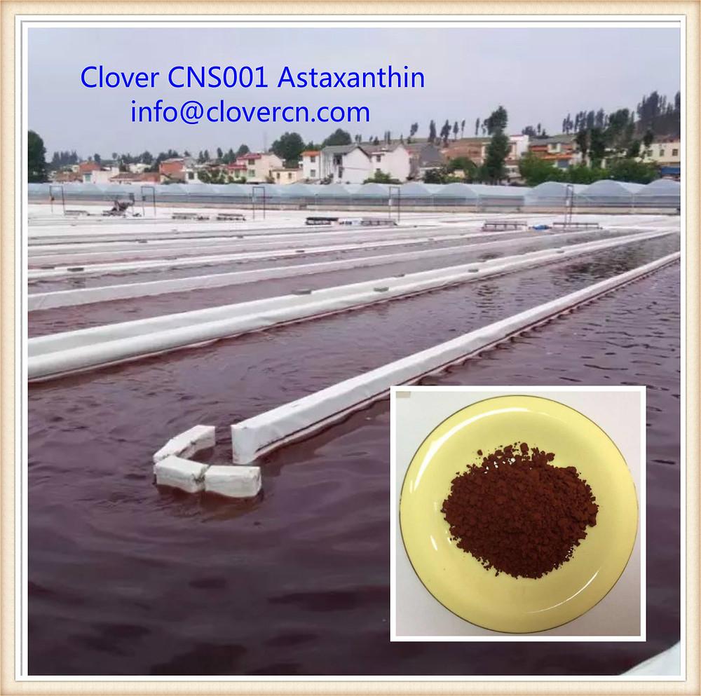 CNS001 Astaxanthin-Haematococcus pluvialis