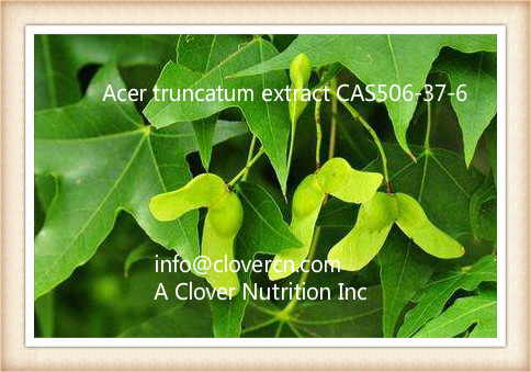 Acer Truncatum Extract CAS506-37-6