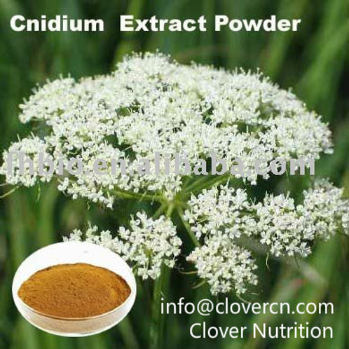 Cnidium Extract Powder CNS021